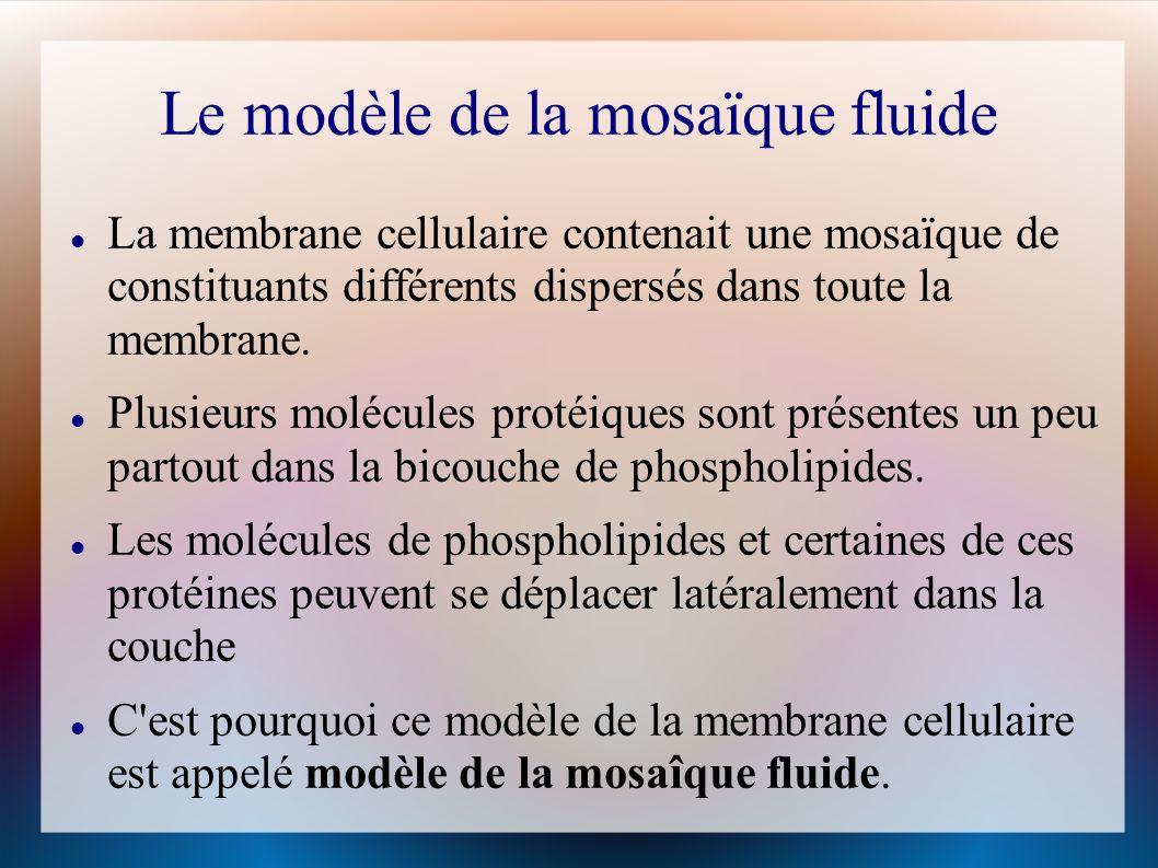Le modèle de la mosaïque fluide