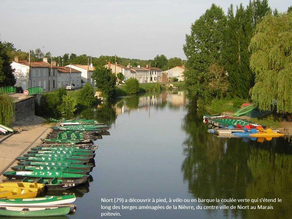 Niort (79) a découvrir à pied, à vélo ou en barque la coulée verte qui s étend le long des berges aménagées de la Nièvre, du centre ville de Niort au Marais poitevin.