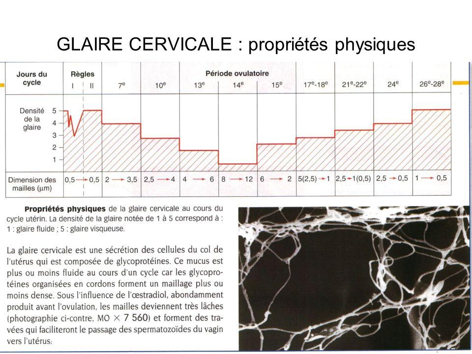 GLAIRE CERVICALE : propriétés physiques