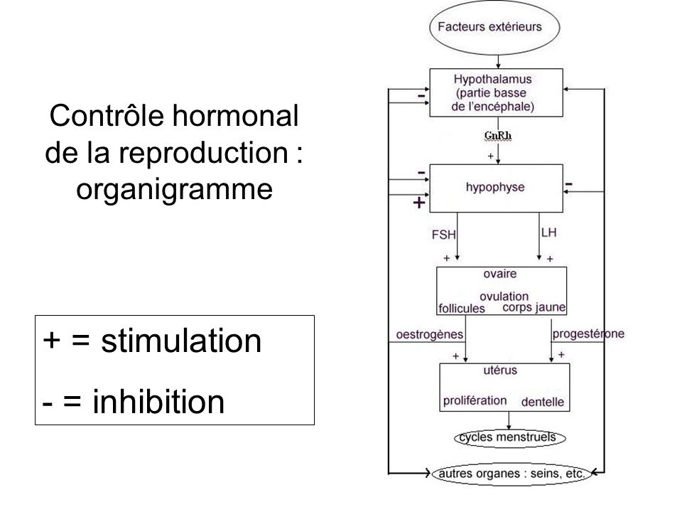 Contrôle hormonal de la reproduction : organigramme