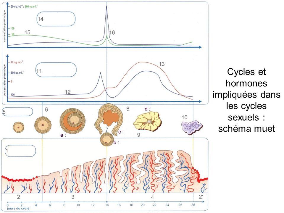 Cycles et hormones impliquées dans les cycles sexuels : schéma muet