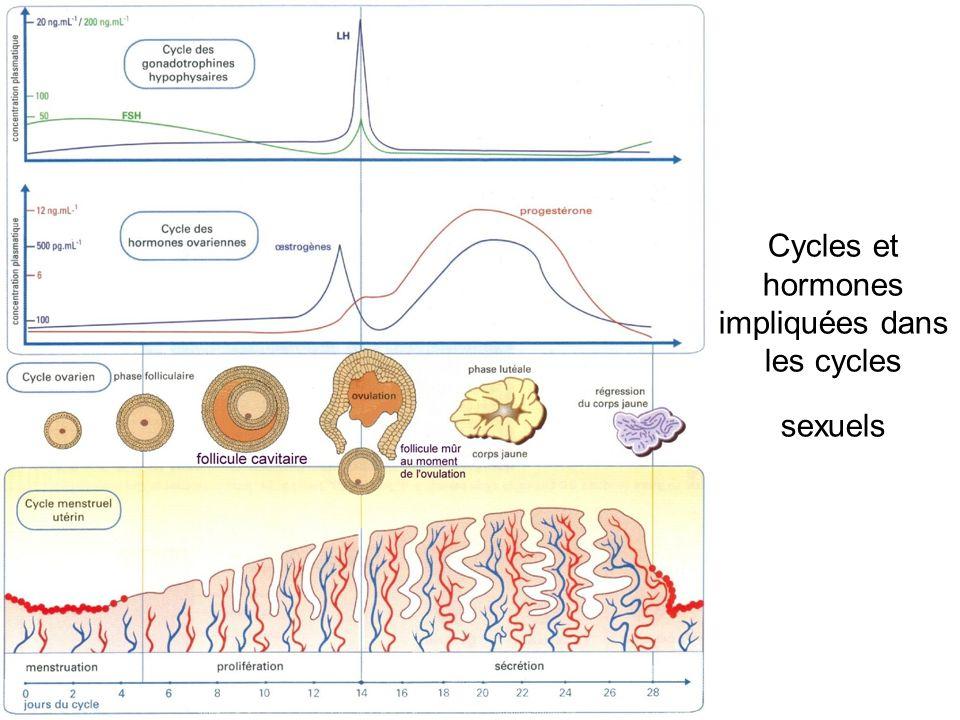 Cycles et hormones impliquées dans les cycles sexuels