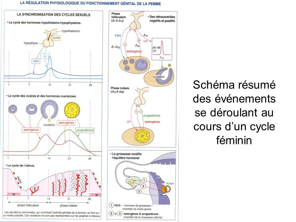 Schéma résumé des événements se déroulant au cours d'un cycle féminin