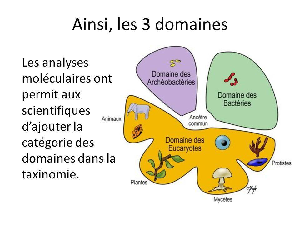 Ainsi, les 3 domaines Les analyses moléculaires ont permit aux scientifiques d'ajouter la catégorie des domaines dans la taxinomie.