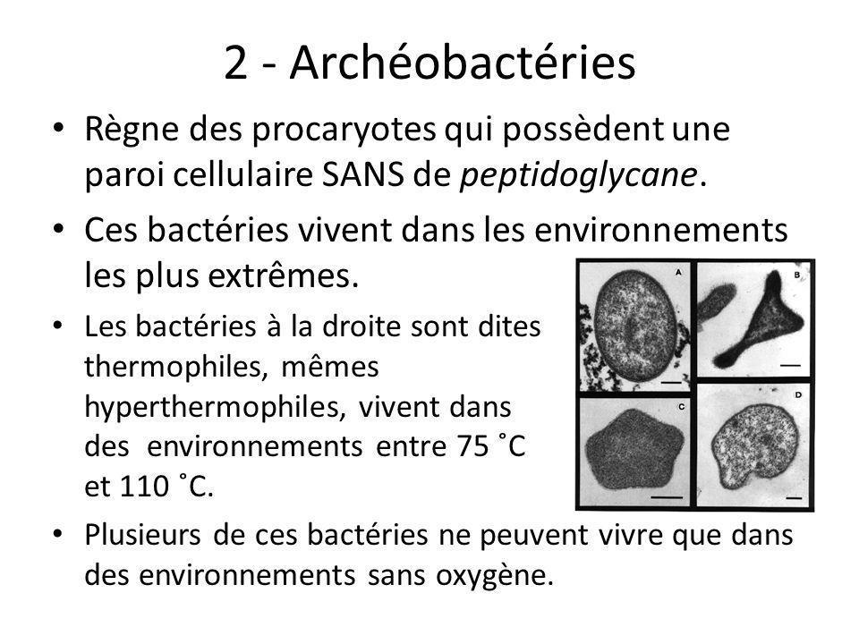 2 - Archéobactéries Règne des procaryotes qui possèdent une paroi cellulaire SANS de peptidoglycane.