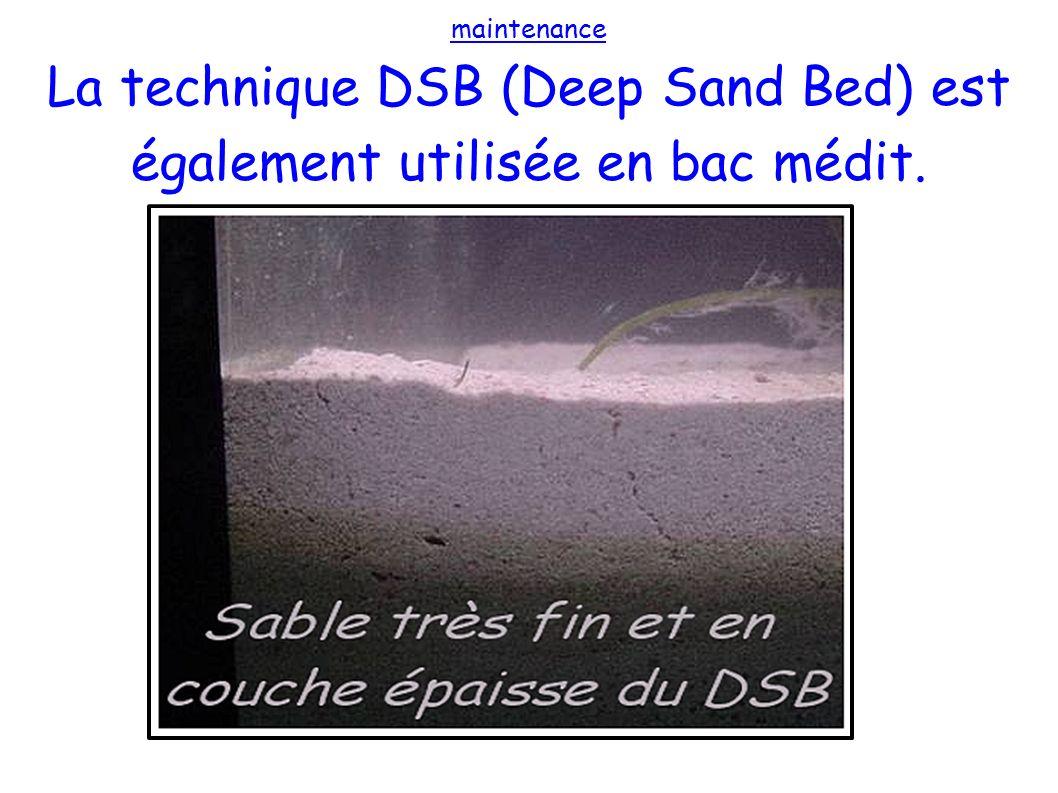 La technique DSB (Deep Sand Bed) est également utilisée en bac médit.