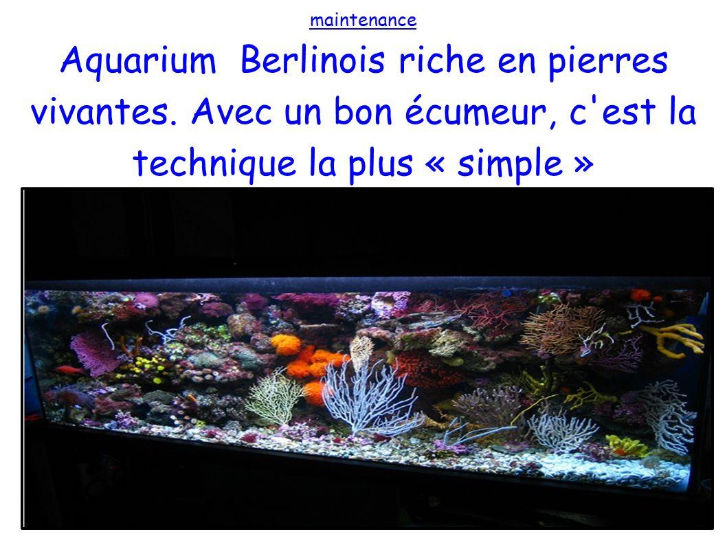 maintenance Aquarium Berlinois riche en pierres vivantes.