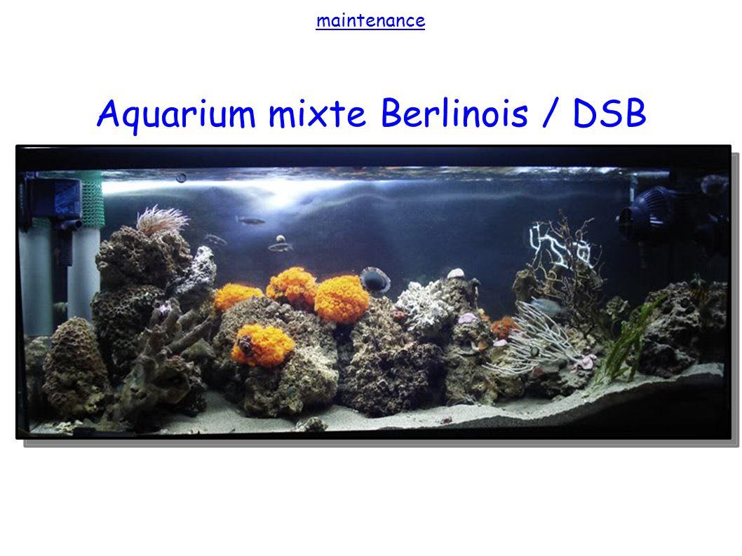 Aquarium mixte Berlinois / DSB