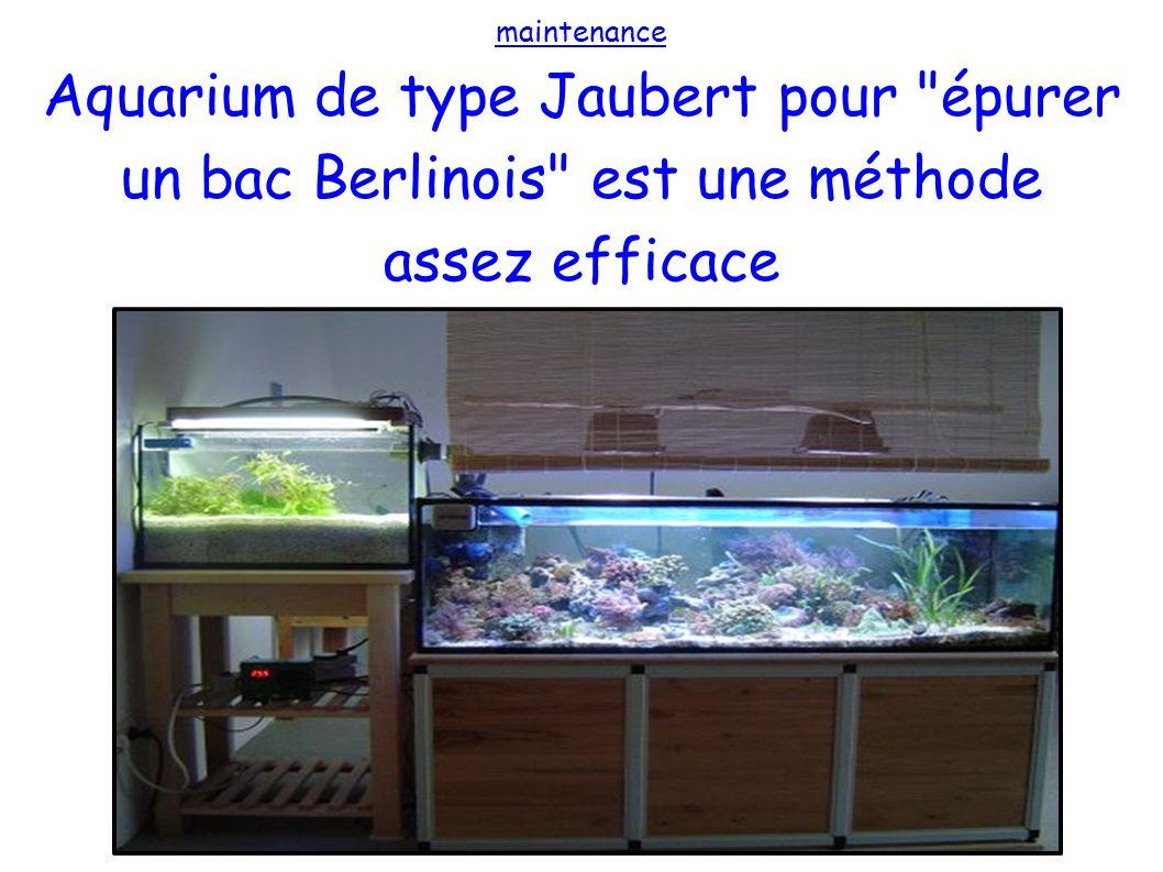 maintenance Aquarium de type Jaubert pour épurer un bac Berlinois est une méthode assez efficace