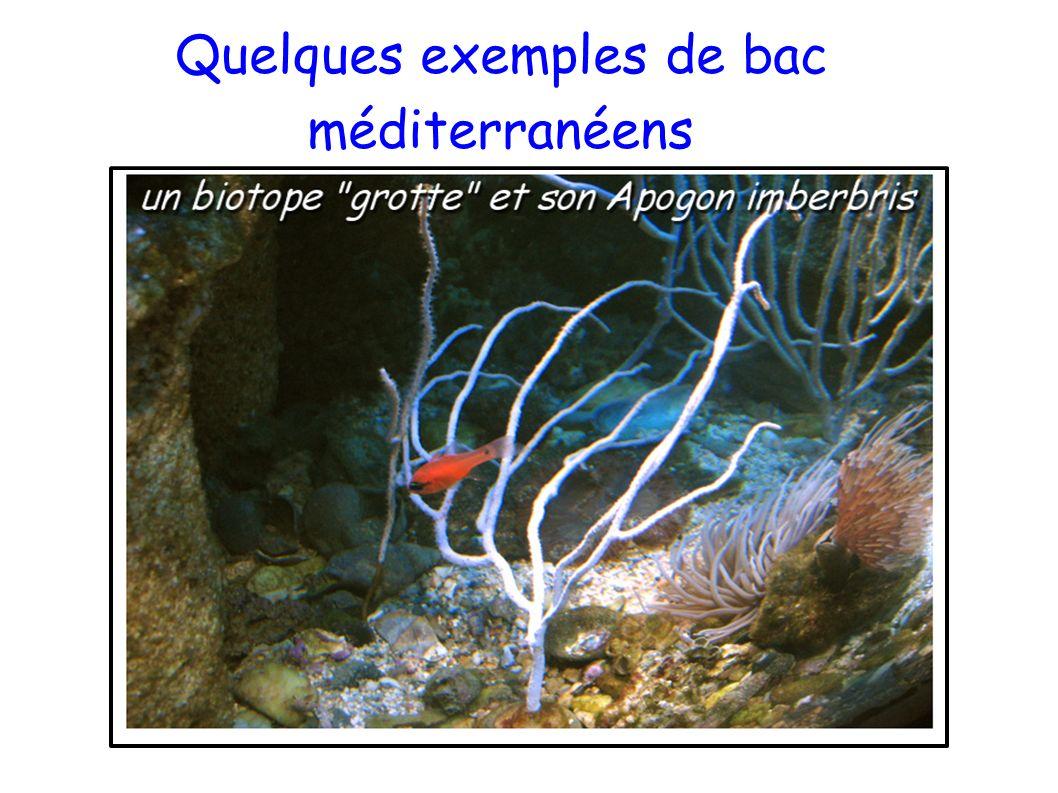 Quelques exemples de bac méditerranéens