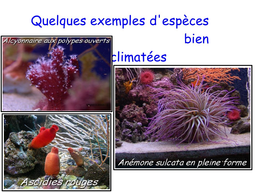 Quelques exemples d espèces bien acclimatées