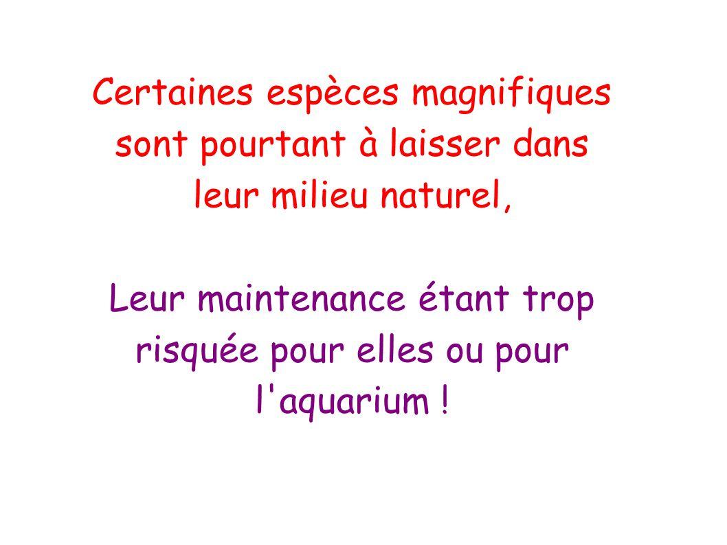 Leur maintenance étant trop risquée pour elles ou pour l aquarium !