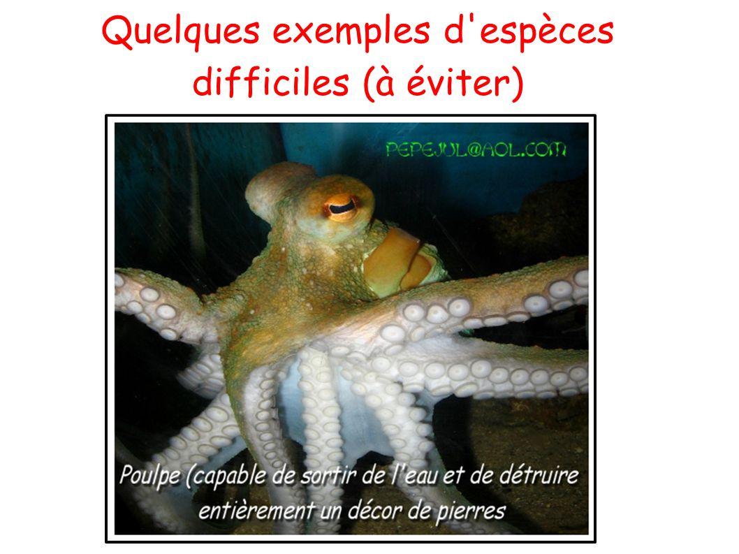 Quelques exemples d espèces difficiles (à éviter)