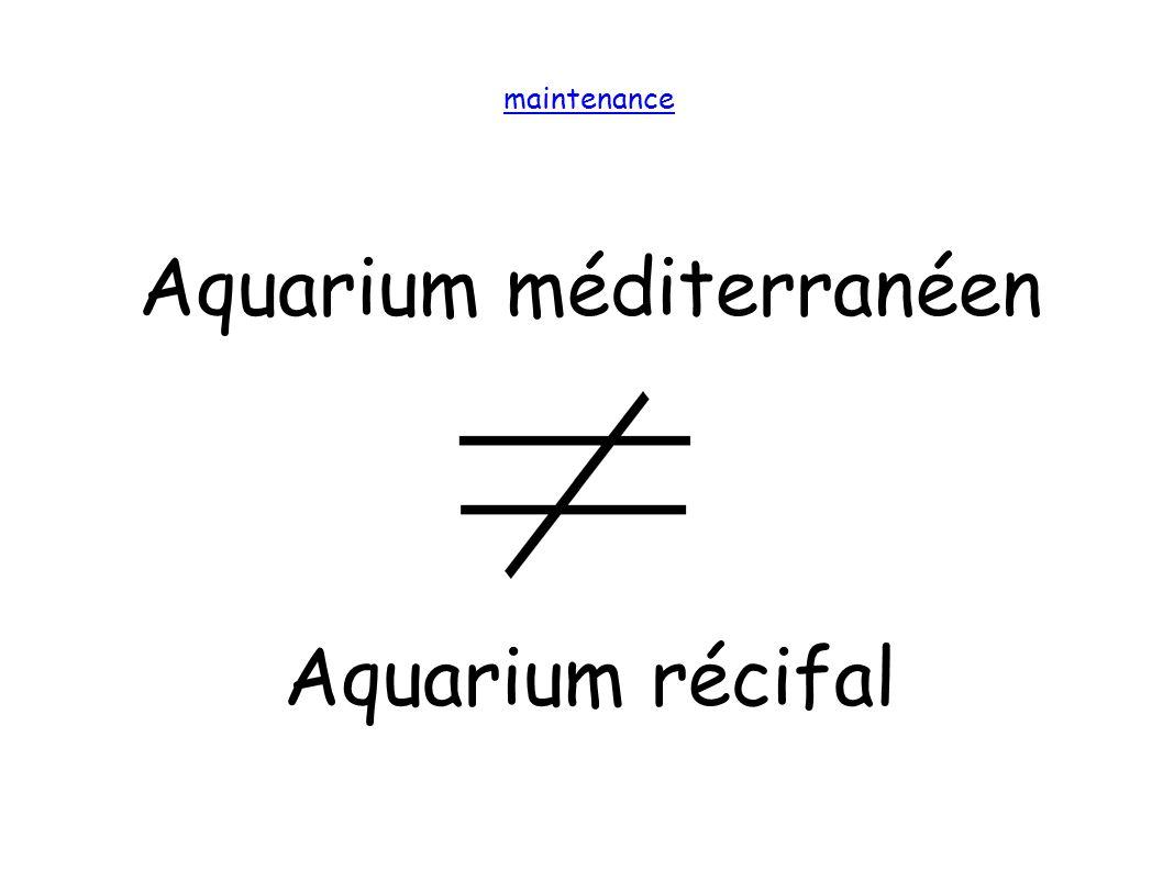 Aquarium méditerranéen