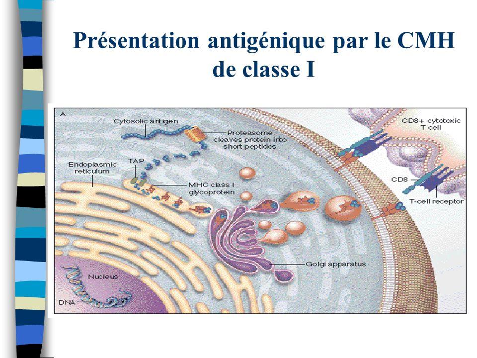 Présentation antigénique par le CMH de classe I
