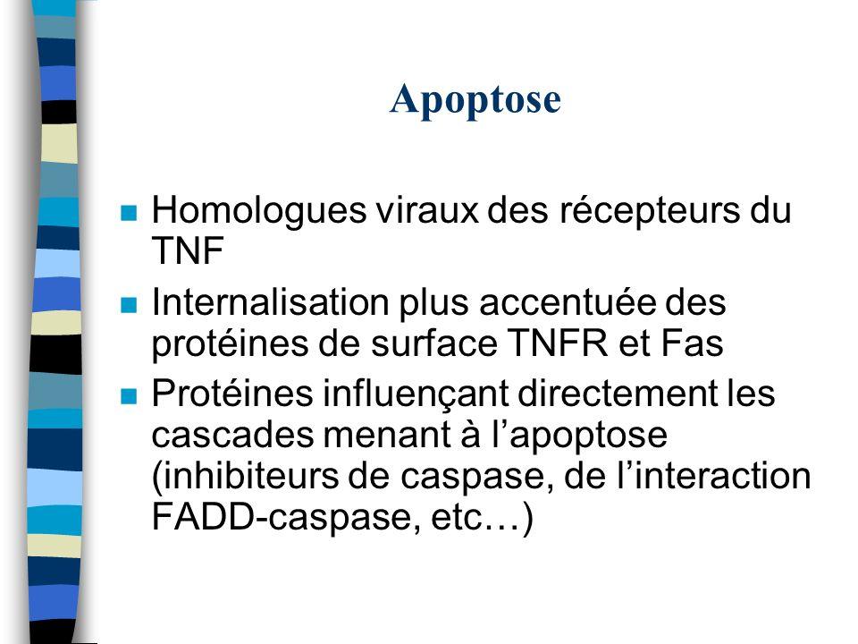 Apoptose Homologues viraux des récepteurs du TNF