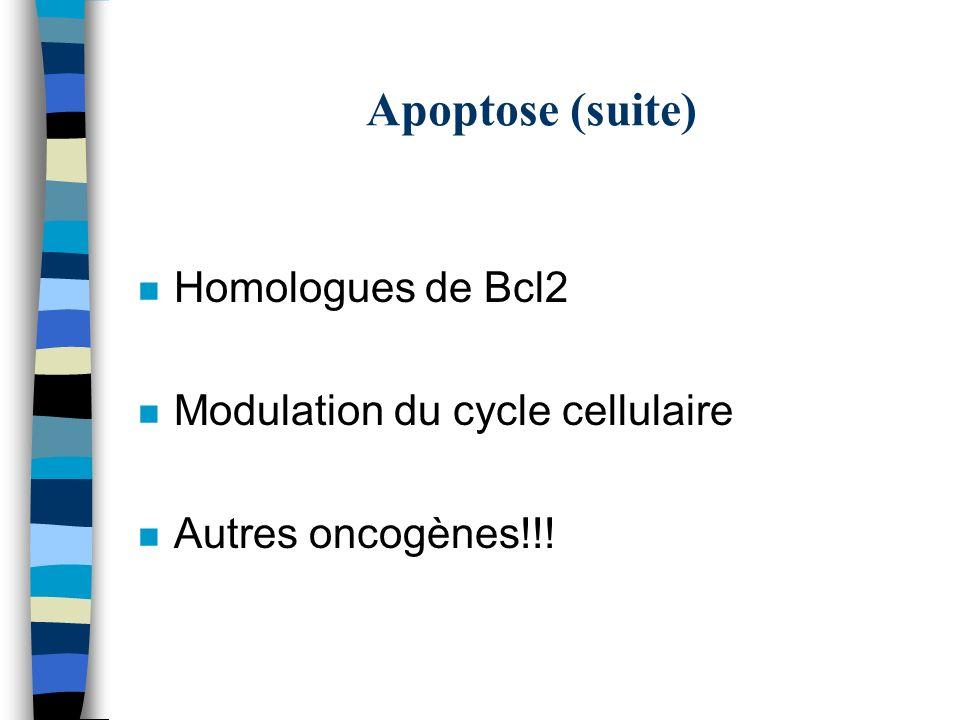 Apoptose (suite) Homologues de Bcl2 Modulation du cycle cellulaire