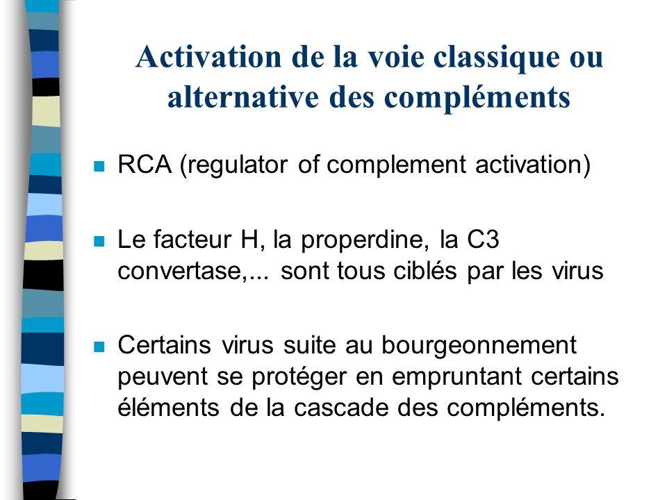 Activation de la voie classique ou alternative des compléments