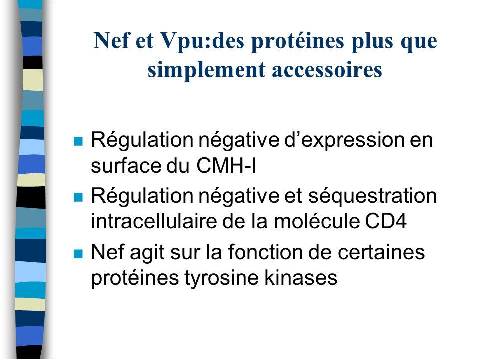 Nef et Vpu:des protéines plus que simplement accessoires