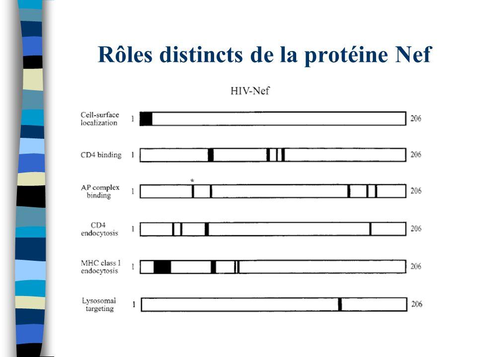 Rôles distincts de la protéine Nef