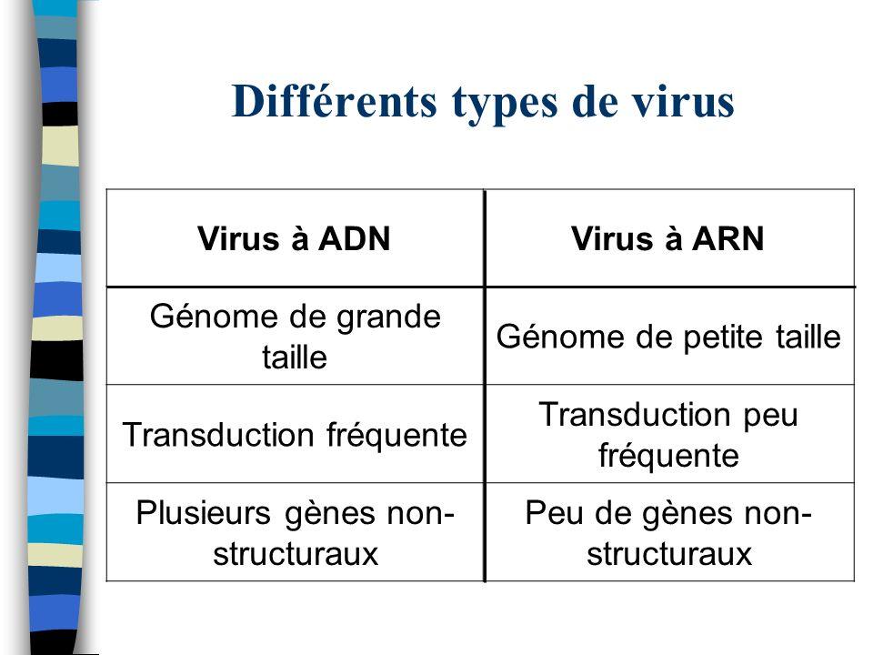 Différents types de virus