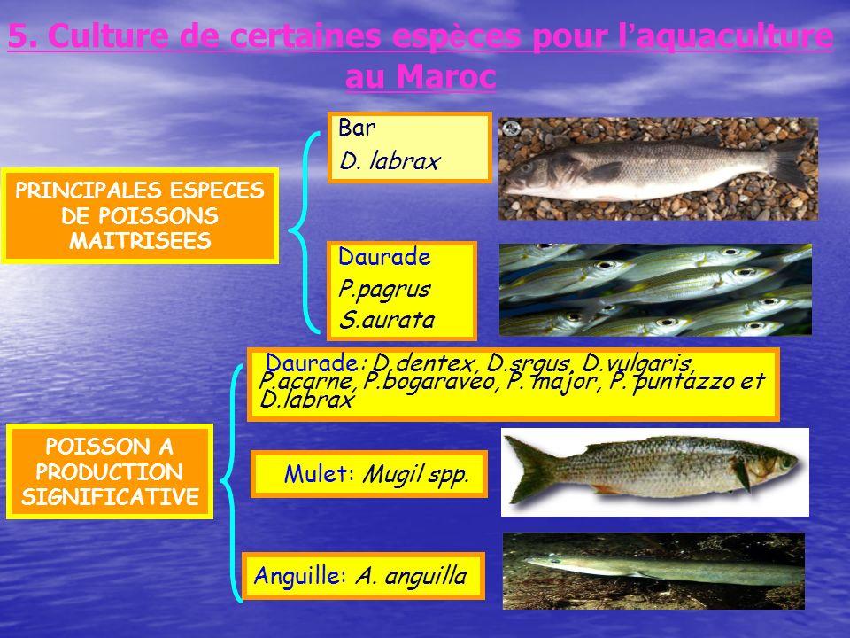 5. Culture de certaines espèces pour l'aquaculture au Maroc