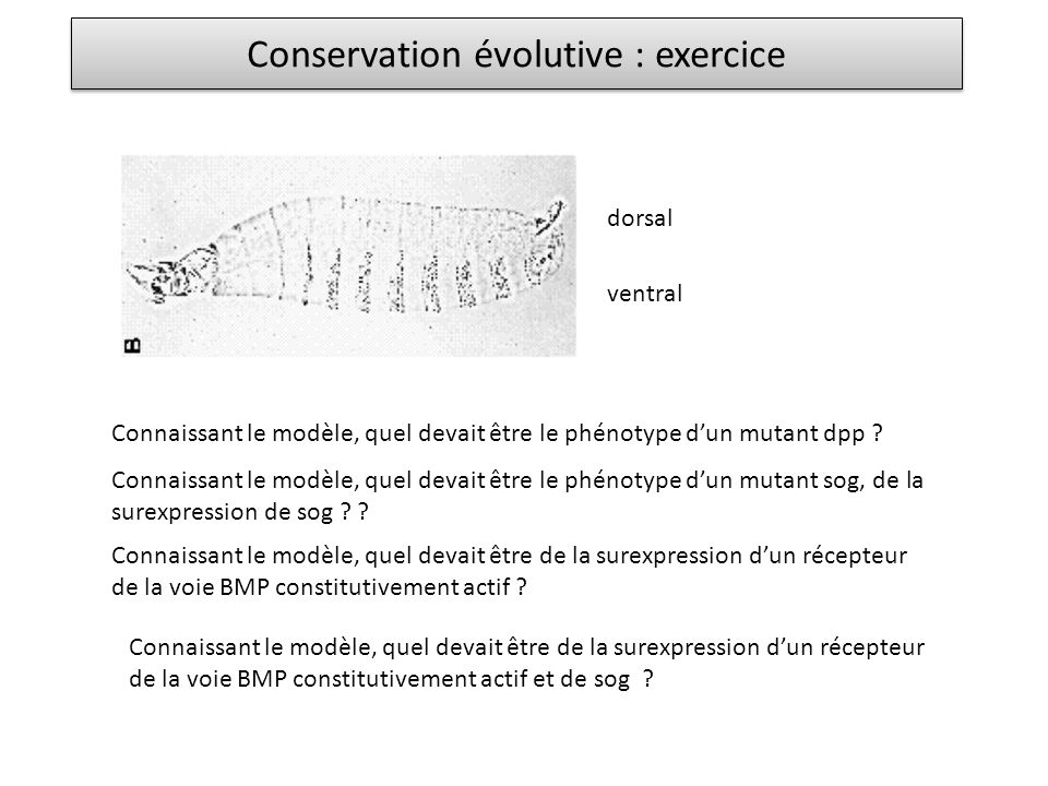 Conservation évolutive : exercice