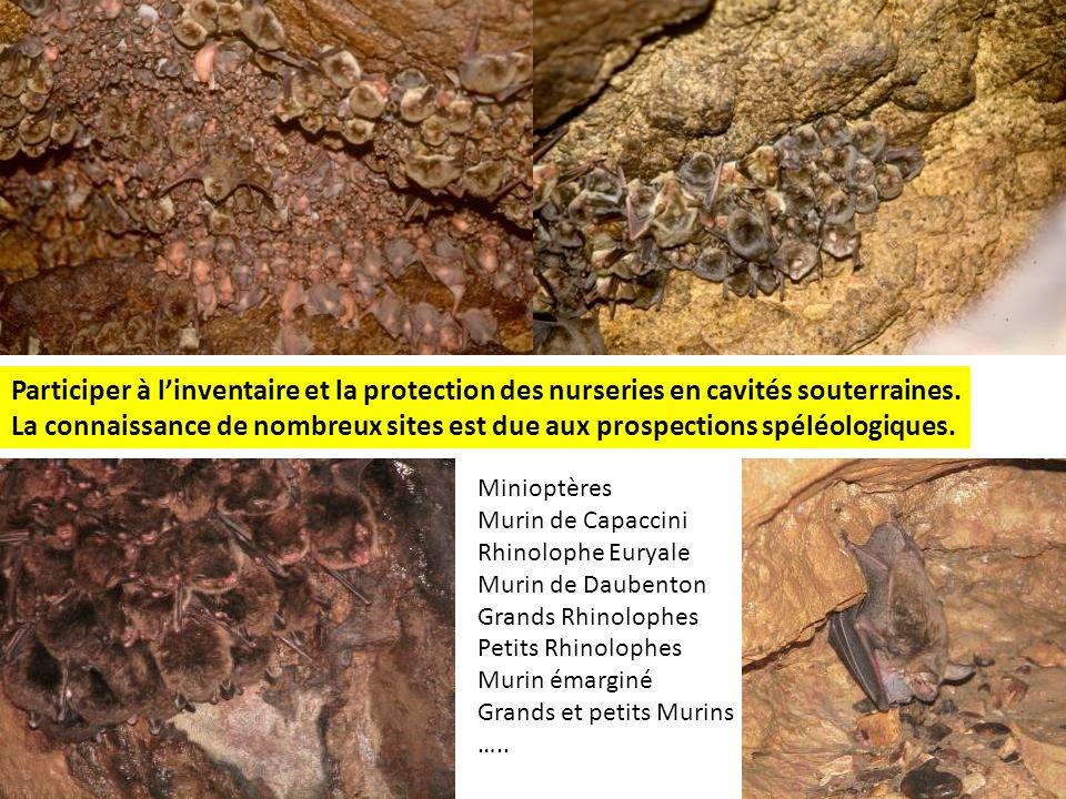 Participer à l'inventaire et la protection des nurseries en cavités souterraines.