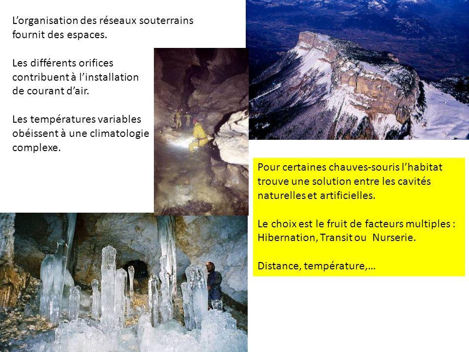 L'organisation des réseaux souterrains