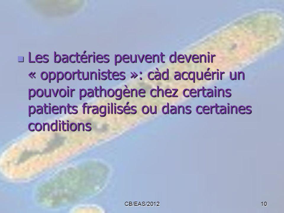 Les bactéries peuvent devenir « opportunistes »: càd acquérir un pouvoir pathogène chez certains patients fragilisés ou dans certaines conditions