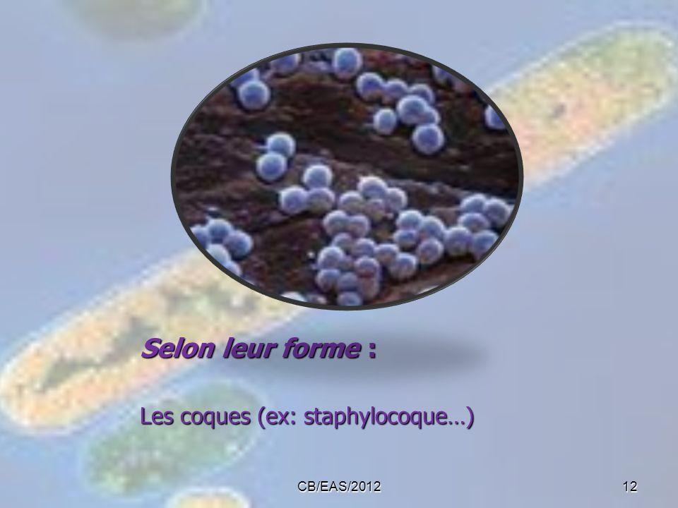 Selon leur forme : Les coques (ex: staphylocoque…) CB/EAS/2012