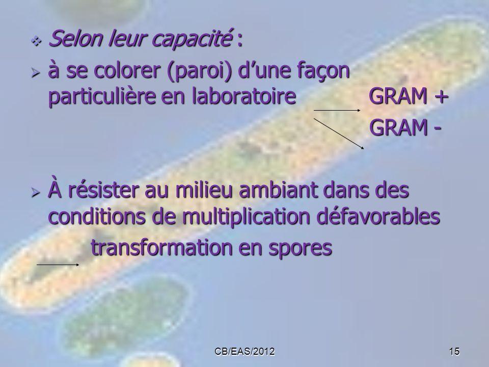 à se colorer (paroi) d'une façon particulière en laboratoire GRAM +