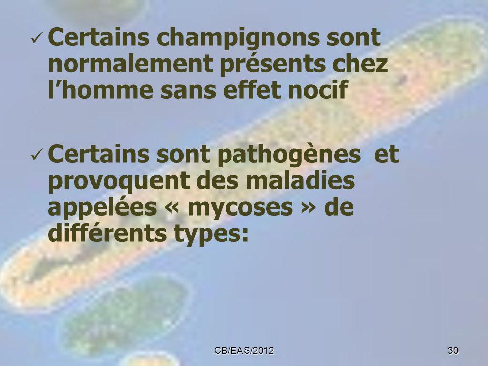 Certains champignons sont normalement présents chez l'homme sans effet nocif