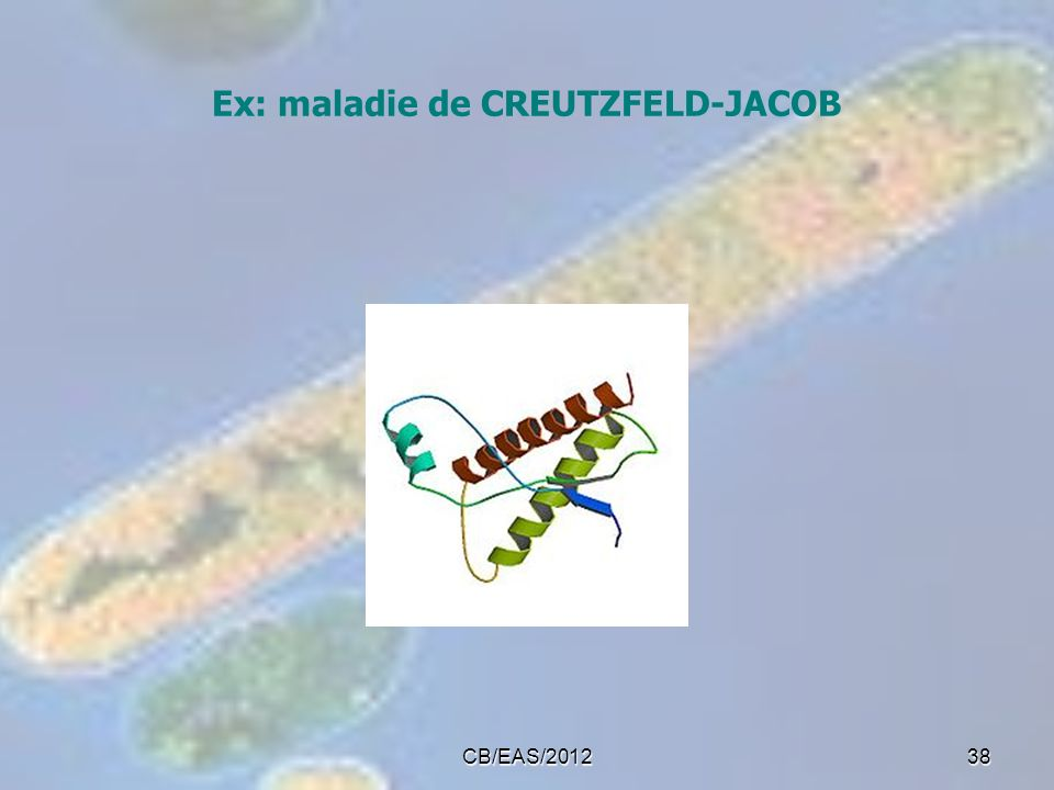 Ex: maladie de CREUTZFELD-JACOB