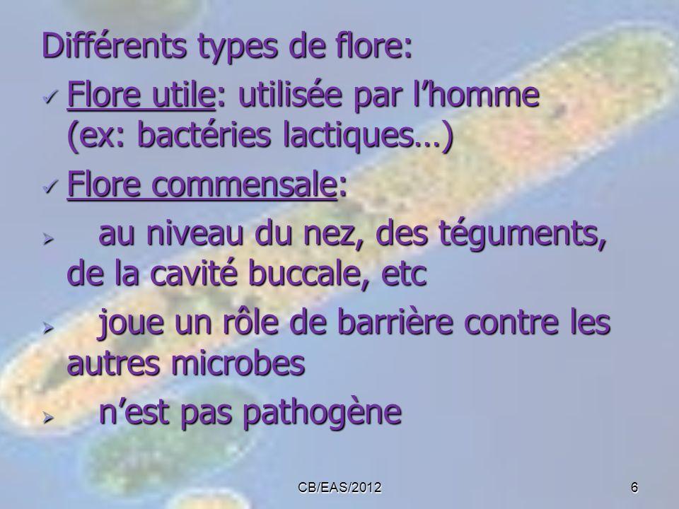 Différents types de flore: