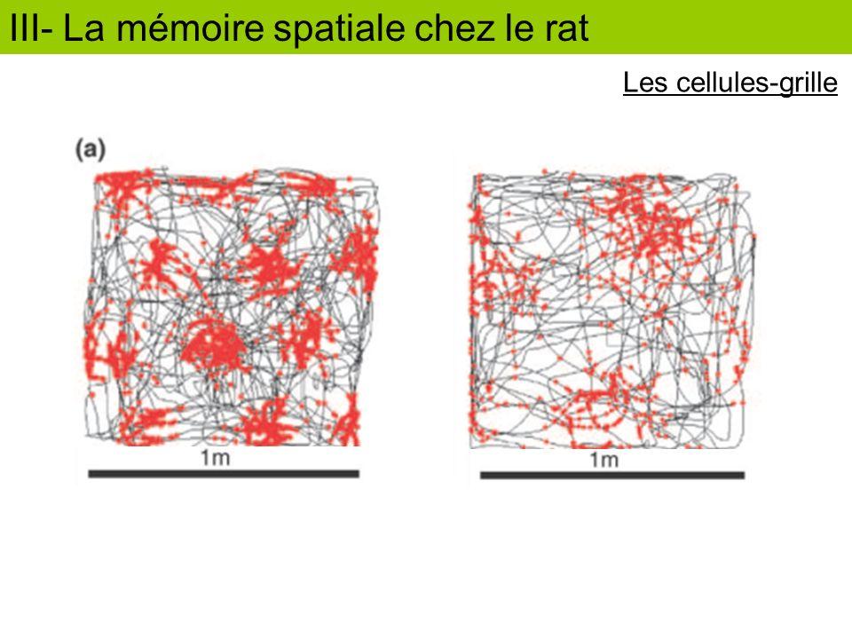 III- La mémoire spatiale chez le rat