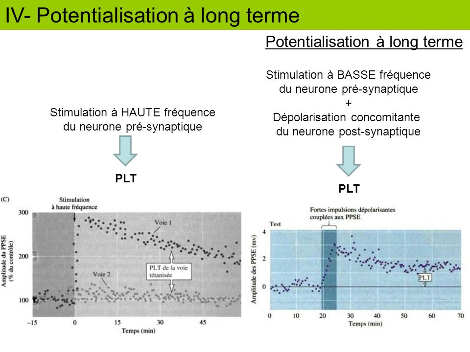 IV- Potentialisation à long terme