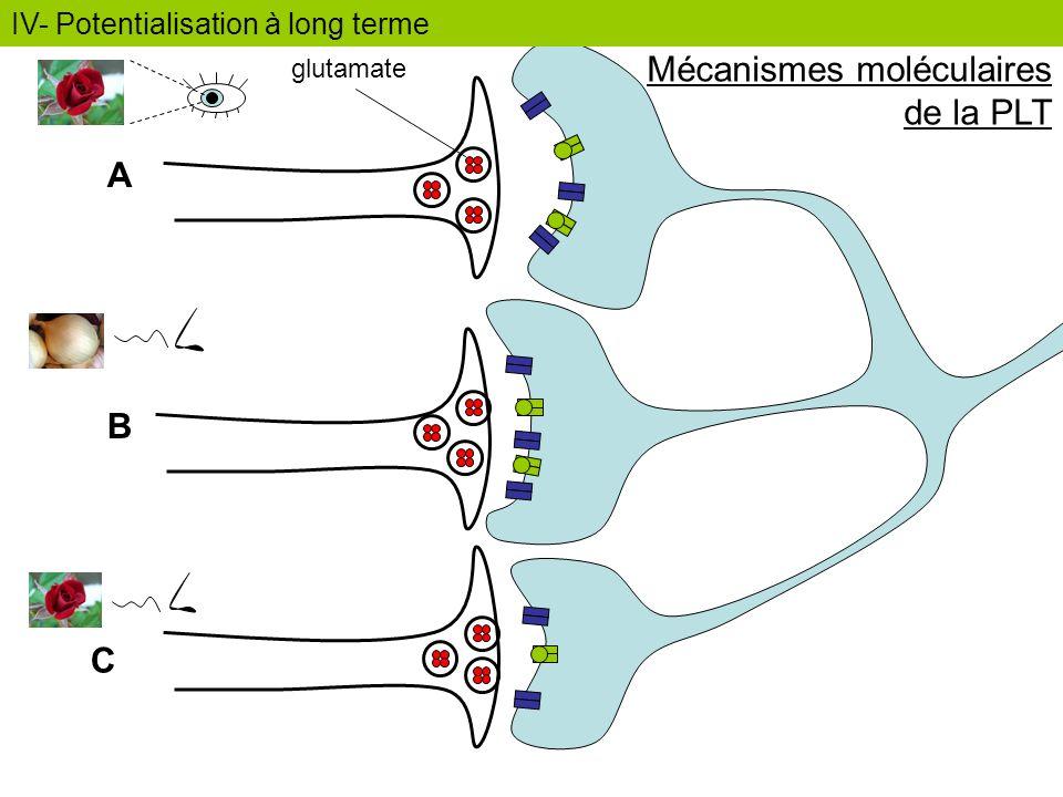 Mécanismes moléculaires de la PLT