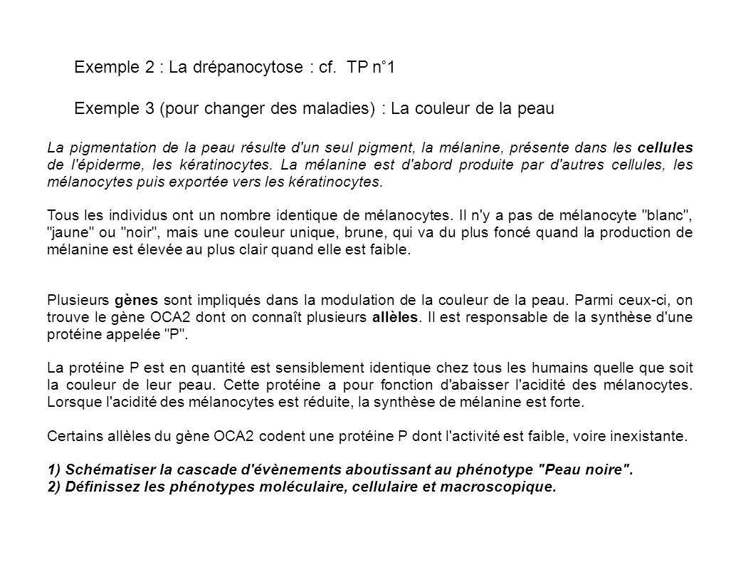 Exemple 2 : La drépanocytose : cf. TP n°1