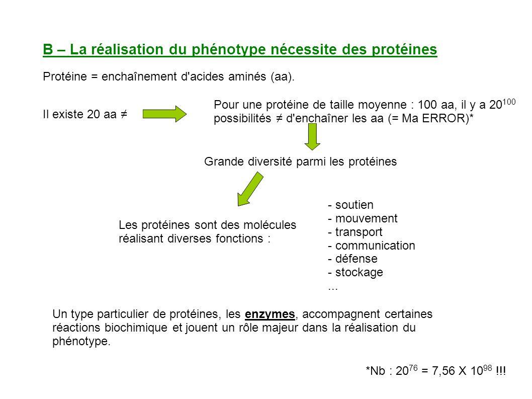 B – La réalisation du phénotype nécessite des protéines