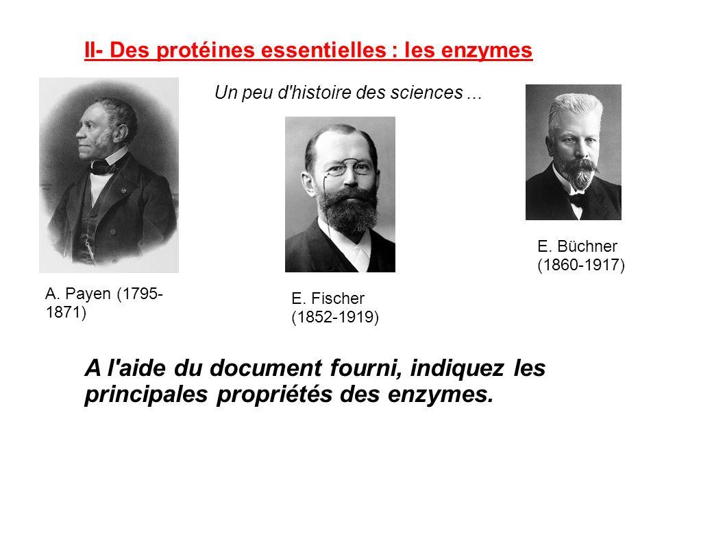II- Des protéines essentielles : les enzymes