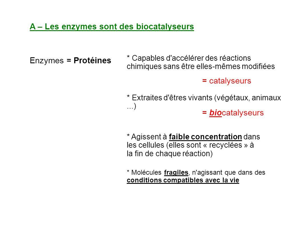 A – Les enzymes sont des biocatalyseurs
