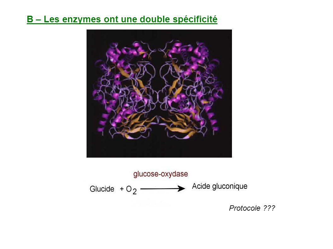 B – Les enzymes ont une double spécificité