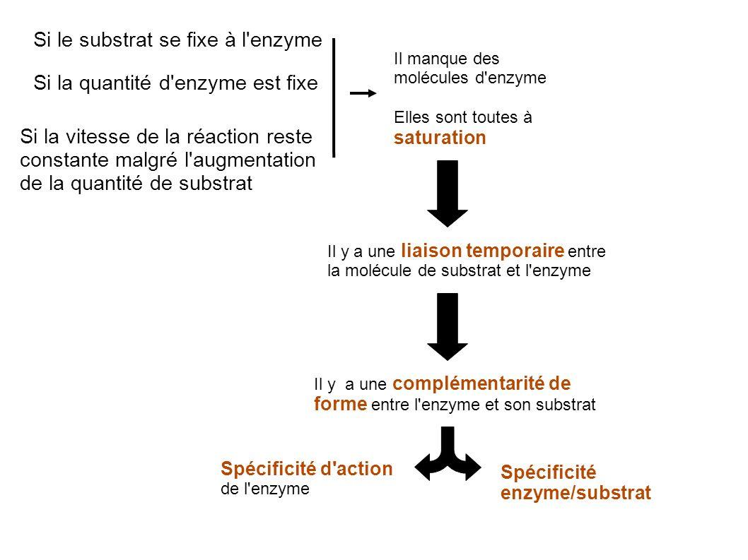 Si le substrat se fixe à l enzyme