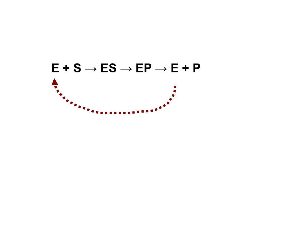 E + S → ES → EP → E + P