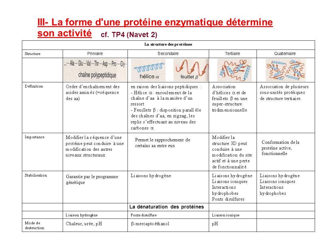 III- La forme d une protéine enzymatique détermine son activité