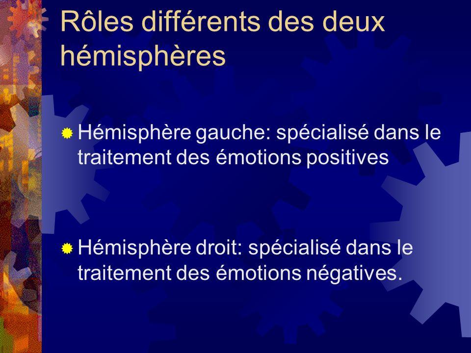 Rôles différents des deux hémisphères
