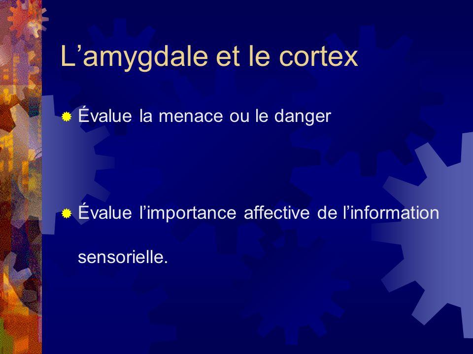 L'amygdale et le cortex
