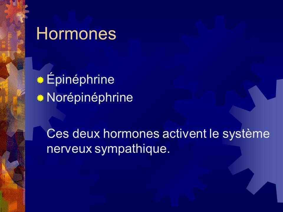Hormones Épinéphrine Norépinéphrine