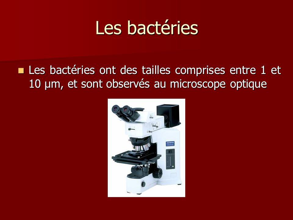 Les bactéries Les bactéries ont des tailles comprises entre 1 et 10 µm, et sont observés au microscope optique.